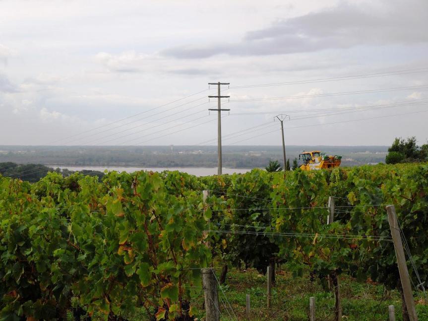 La Gironde : son département est le plus grande de France, son estuaire le plus grand d'Europe, et ses vins les plus grands du monde.