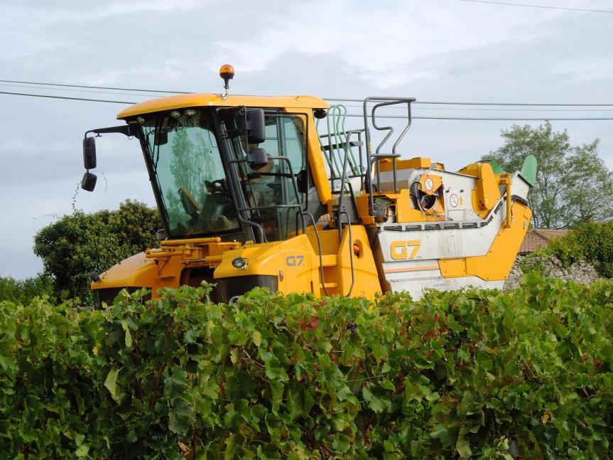 vendangeuse mécanique au milieu des vignes