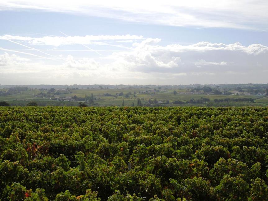 vue panoramique à la frontière entre le Blayais et le Bourgeais