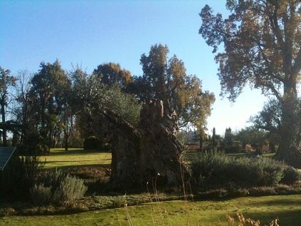Pape parc olivier millénaire
