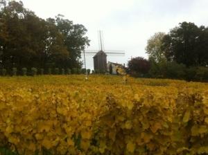 La Vigne de Sannois
